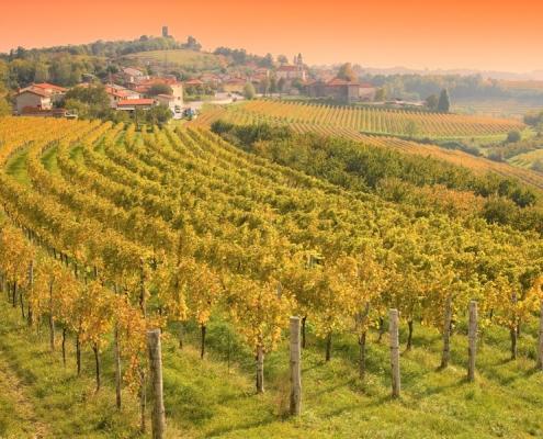 Ферма с виноградниками в центре винодельческого региона Горишка Брда