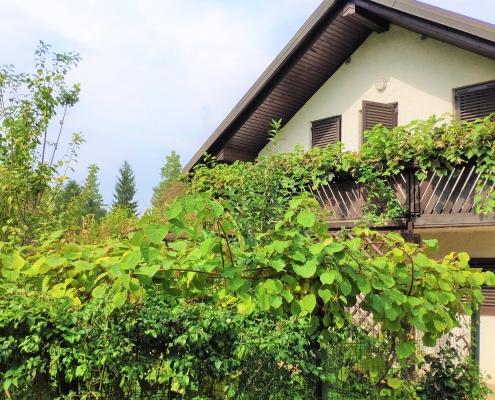Cozy house with pool and wine cellar near Ljubljana